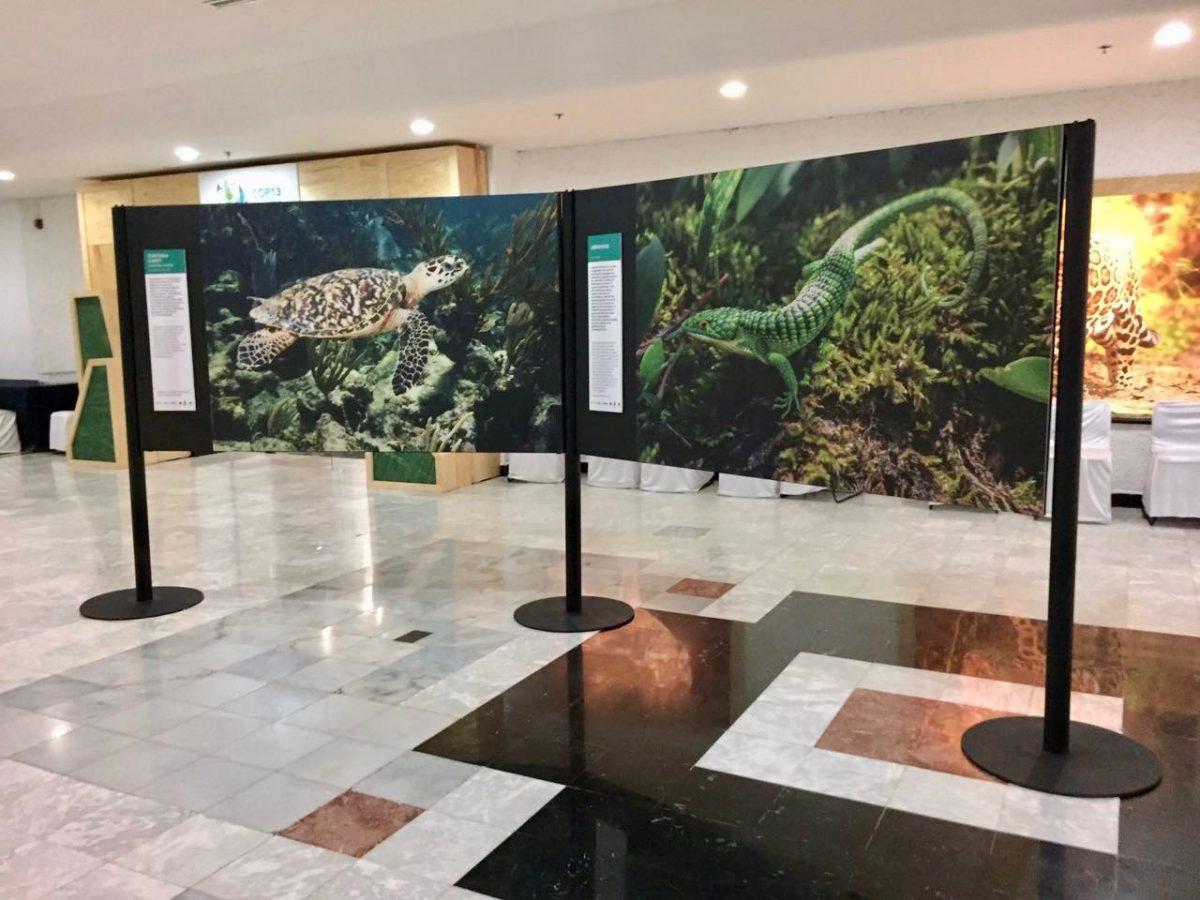 Displays Desarrollamos la estructura de los displays para la exposición fotográfica.